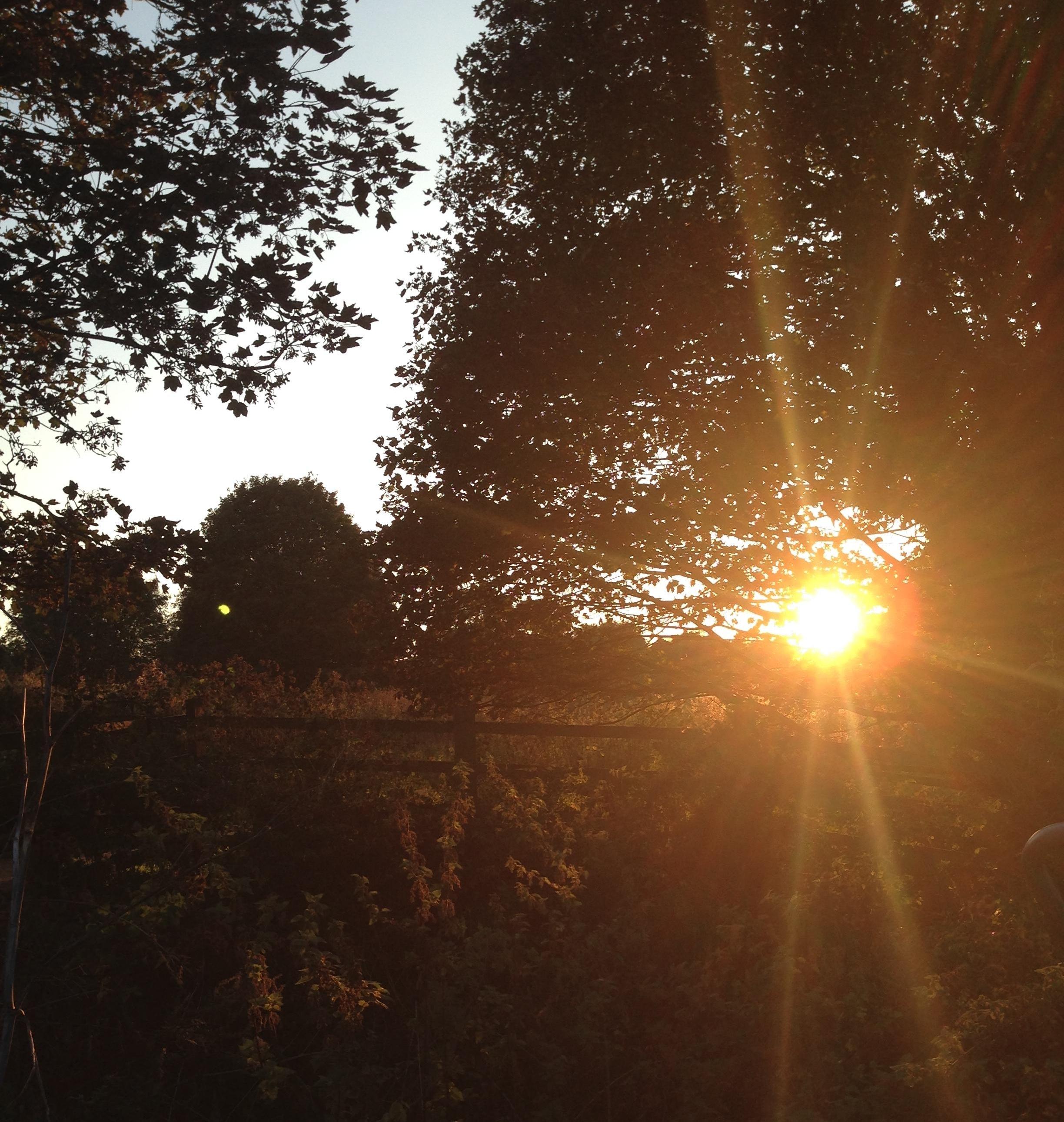 leamington-sunshine-756851-edited.jpg